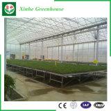 Sistema di coltura idroponica della serra del film di materia plastica per gli ortaggi/fiori/frutta