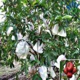 A tela/banana não tecidas da tampa da exploração agrícola dos PP Spunbond cresce o saco com os sacos não tecidos da fruta da tampa da tela/planta de 17GSM PP