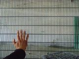 Barriera di sicurezza rete fissa/358 di ascensione di 358 obbligazioni anti alta