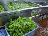 Contibuously 잎줄기 채소 과일 양상추 양배추 거품 세척 세탁기 청소 기계