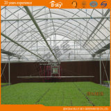 Multi-Span Plastic Film Greenhouse для Hydroponics
