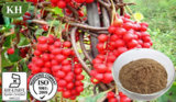 Schizandra Auszug: Schisandrin 1%-9% HPLC