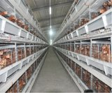 H는 최고 가격에게 좋은 품질 가금 농장 계란 층 닭 감금소 장비를 타자를 친다