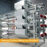 Type de H cage automatique galvanisée de poulet d'IMMERSION chaude pour augmenter de poulette
