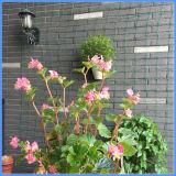 Il nylon protegge dal reticolato della pianta di giardino degli uccelli dei roditori