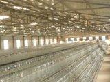 Cages de treillis métallique de poule de ponte d'oeufs à vendre (A3L120)