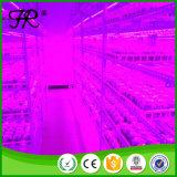 고효율 LED 플랜트 전체 스펙트럼 라이트 라이트