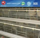 Equipamento de cultivo das aves domésticas do projeto da exploração agrícola de galinha para a venda