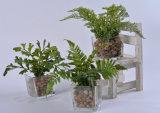Clases de plantas artificiales (Crowndaisy, apio etc) en Potted de cristal para la decoración