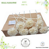 Sola Flower 8PCS / Box Carnation Reed Diffuser Decoration Accessory, Dry Flower