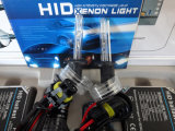 H1 35W 6000k Xenon Lamp Car Accessory (規則的なバラスト)