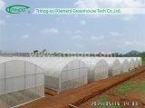 Invernadero plástico del túnel económico para el vehículo