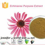 Het zuivere Natuurlijke Verbeterende van de Immuniteit Zure Echinacea Purpurea Uittreksel van Chicoric