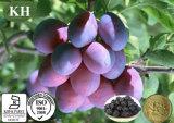 Prunus secco Salicina L di 20:1 di 10:1 di 5:1 dell'estratto della prugna