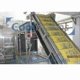 Chaîne de production de congélation de maïs