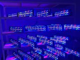 Programmierbare verwendete LED Aquarium-Beleuchtung des 180 Watt-Korallenriff-