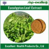 Estratto naturale del foglio dell'eucalyptus di 100%