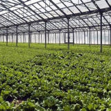 De hete Serre van het Glas van de multi-Spanwijdte van de Verkoop voor Groente