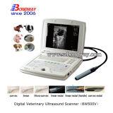 Scanner d'ultrason pour l'essai de grossesse équin
