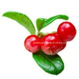 皮のアルファArbutinのBearberryのエキスArbutin 20%-99%を白くすること