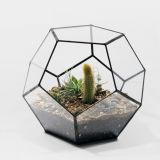 Moderna globo de cristal que cuelgan terrario Adornos Diseño