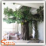 Árvore de Jackfruit artificial distintiva da fibra de vidro