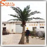 Palm van de Kokosnoot van de Glasvezel van de Decoratie van de tuin de Kunstmatige Valse