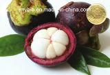 Горячая продавая Альфаа-Mangostin 20%-90% полифенолов 30% выдержки мангустана