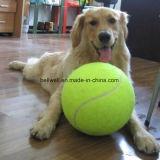 الكلب عبث محبوب كرة