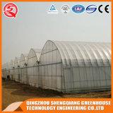 China-Lieferant Multi-Überspannung Plastikgewächshaus mit Kühlsystem/Wasserkultursystem