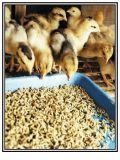 Плоско умрите стан 120 лепешки, цыплятина подайте машина лепешки, лепешка животного питания делая стан