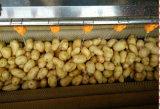 Máquina de lavar do vegetal do Radish de Peeler da fruta do nabo da máquina da limpeza vegetal da cenoura da escova