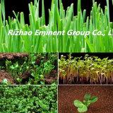 bester Preis des Qualitätsmeerespflanzebiodüngemittels