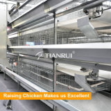 Matériel automatique de poulette de constructeur fiable de la Chine pour la ferme de couche