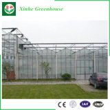 Парник Multi-Пяди коммерчески стеклянный для растущий овощей