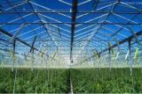 Tipo invernadero de cristal de Venlo para el mercado de Europa con la mejor calidad