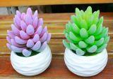 Migliori piante artificiali di vendita di Gu-Jy06224153 succulente