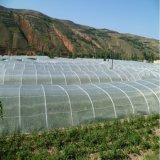 Овощ Meyabond зеленый засаживает сети насекомого