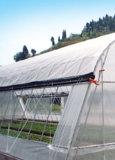 L'anti insetto di agricoltura, anti rete dell'afide per protegge la verdura della pianta