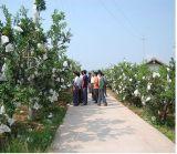 マンゴの成長するフルーツのための防水環境のペーパー保護袋