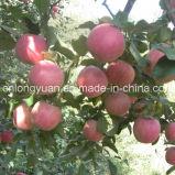 Коробка хорошего качества пакуя свежий Apple