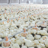 Equipamento da exploração avícola da alta qualidade do jogo cheio para a galinha