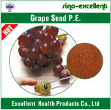 Polvo natural del extracto del germen de la uva del 100%