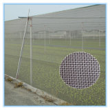 حارّة [سلد] ألومنيوم [أنتي-ينسكت] يحبك شبكة [غرين هووس] يستعمل في زراعة