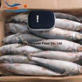 Maquereau surgelé de Pacifique de poissons d'eau de mer