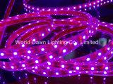 CE contabilità elettromagnetica LVD RoHS due anni di garanzia, indicatore luminoso di striscia dentellare flessibile SMD3528/5050 del LED con CE& RoHS