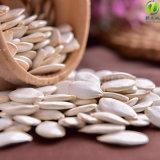 Семена тыквы китайского снежка зеленой еды белые 11-14cm