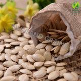 Семена тыквы кожи Shine верхнего качества с 10cm от Иннер Монголиа для кашевара