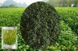 Chá Verde Fresco e Aroma
