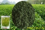 Té Verde Fresco y Aroma